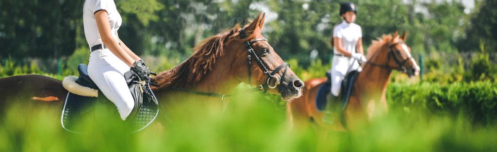 Hästar i hagen